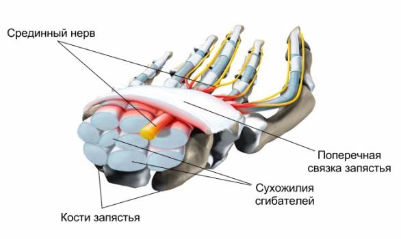 УЗИ периферических нервов что показывает
