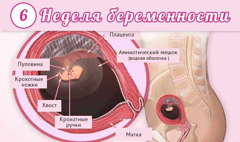 УЗИ на 6 и 7 неделе беременности