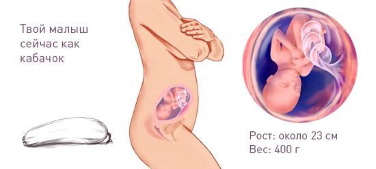 Фото УЗИ беременности 24 недели